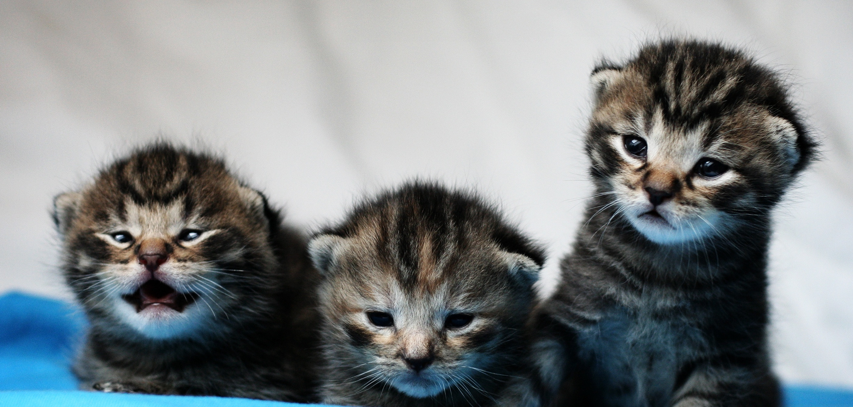 kittens by mathias-erhart, on Flickr
